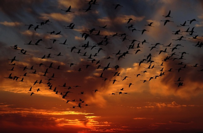 flamingos-1619415_1280