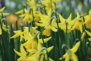 spring-1209086_1920