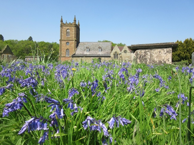 church bluebells2
